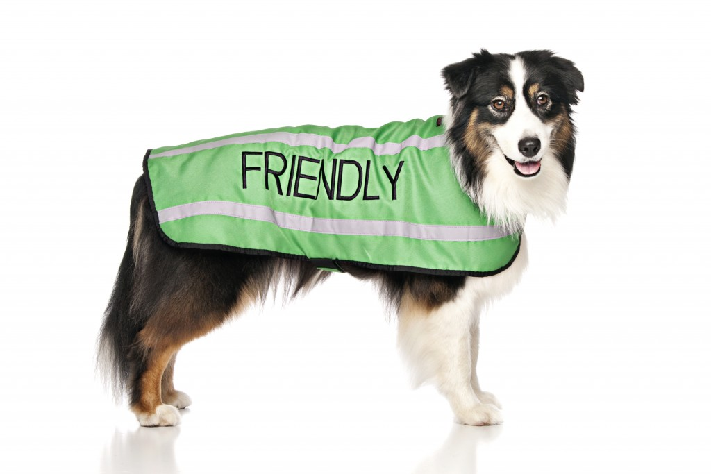 FRIENDLY DOG, Dog Coat. Dog awareness and Safety Coat, Green colour coded.