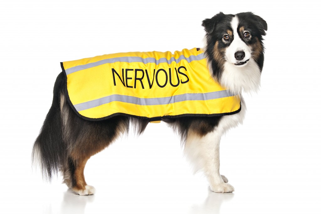 NERVOUS DOG, Dog Coat. Dog awareness and Safety Coat, Yellow colour coded.
