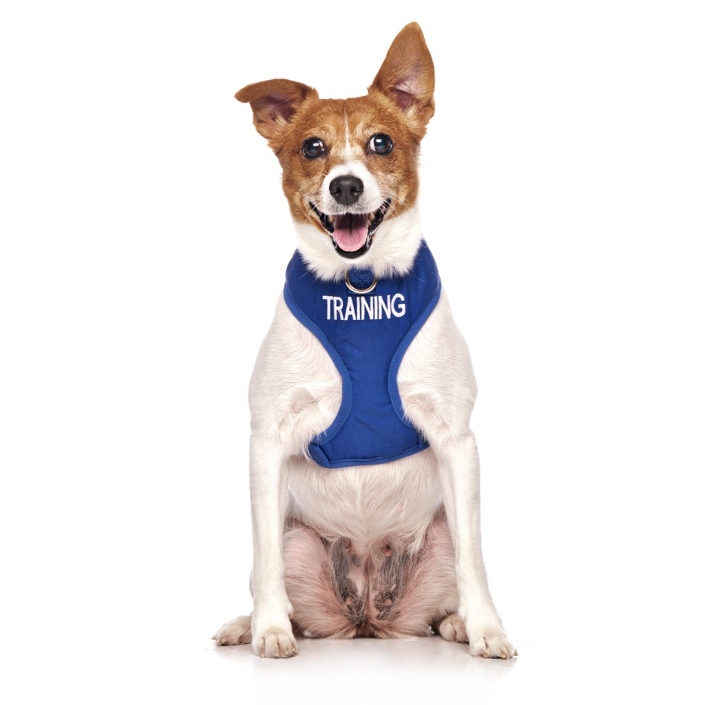 TRAINING DOGS, Dog Vest Harness Blue Colour Code