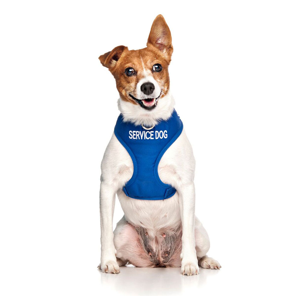 SERVICE DOG, Dog Vest Harness Blue Colour Code