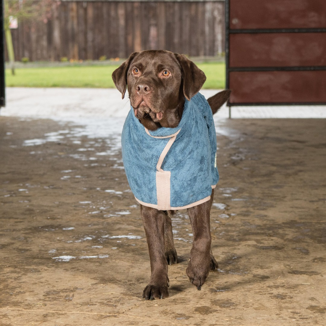 Ruff & Tumble Cotton Drying Coat in four colours to suit most breeds