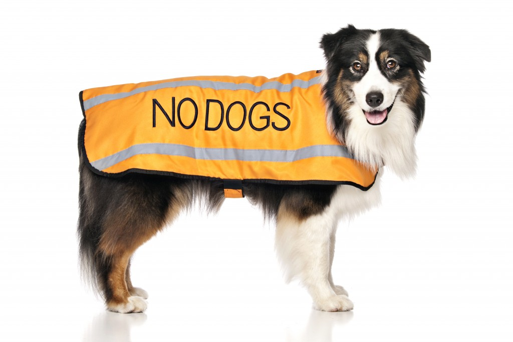 NO DOG, Dog Coat. Dog awareness and Safety Coat, Orange colour coded.