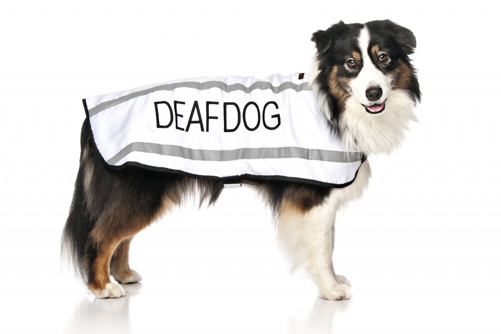 DEAF DOG, Dog Coat. Dog awareness and Safety Coat, White colour coded.