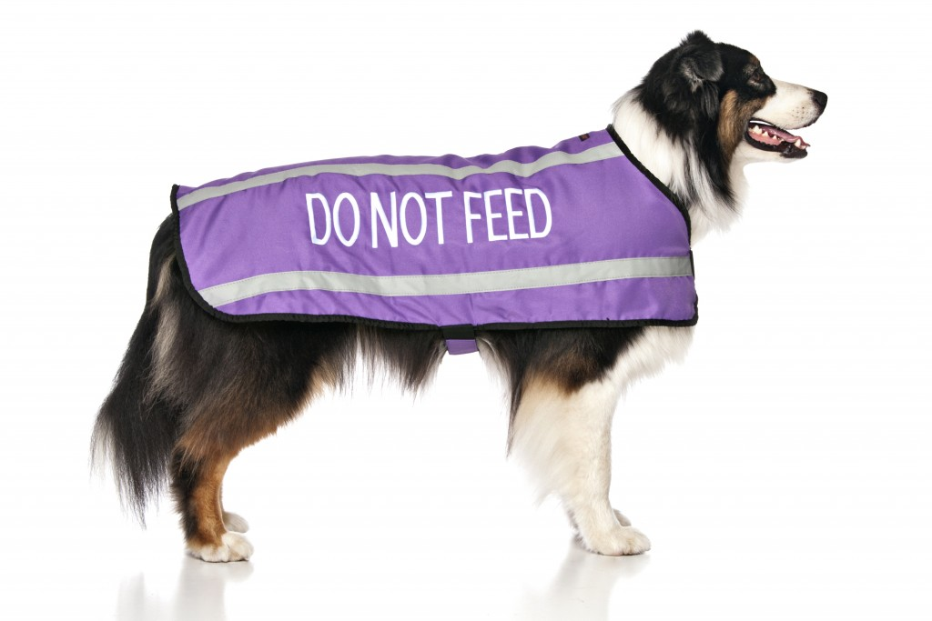 DO NOT FEED, Dog Coat. Dog awareness and Safety Coat, Purple colour coded.