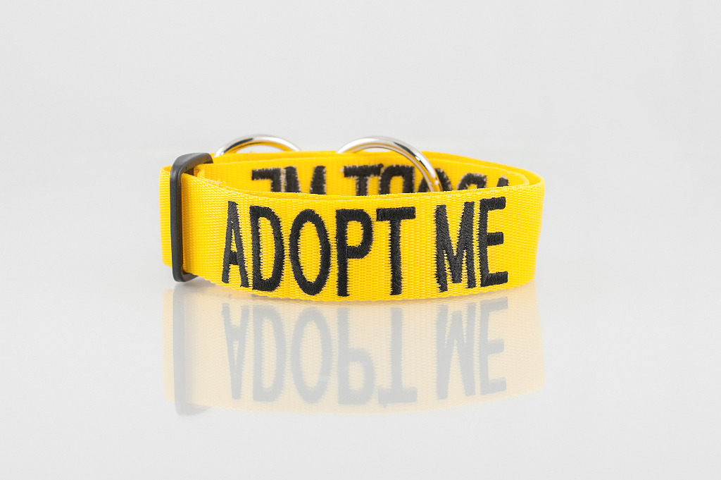 ADOPT ME DOG, Dog collar Semi Choke and Buckle Collars Yellow Colour Code