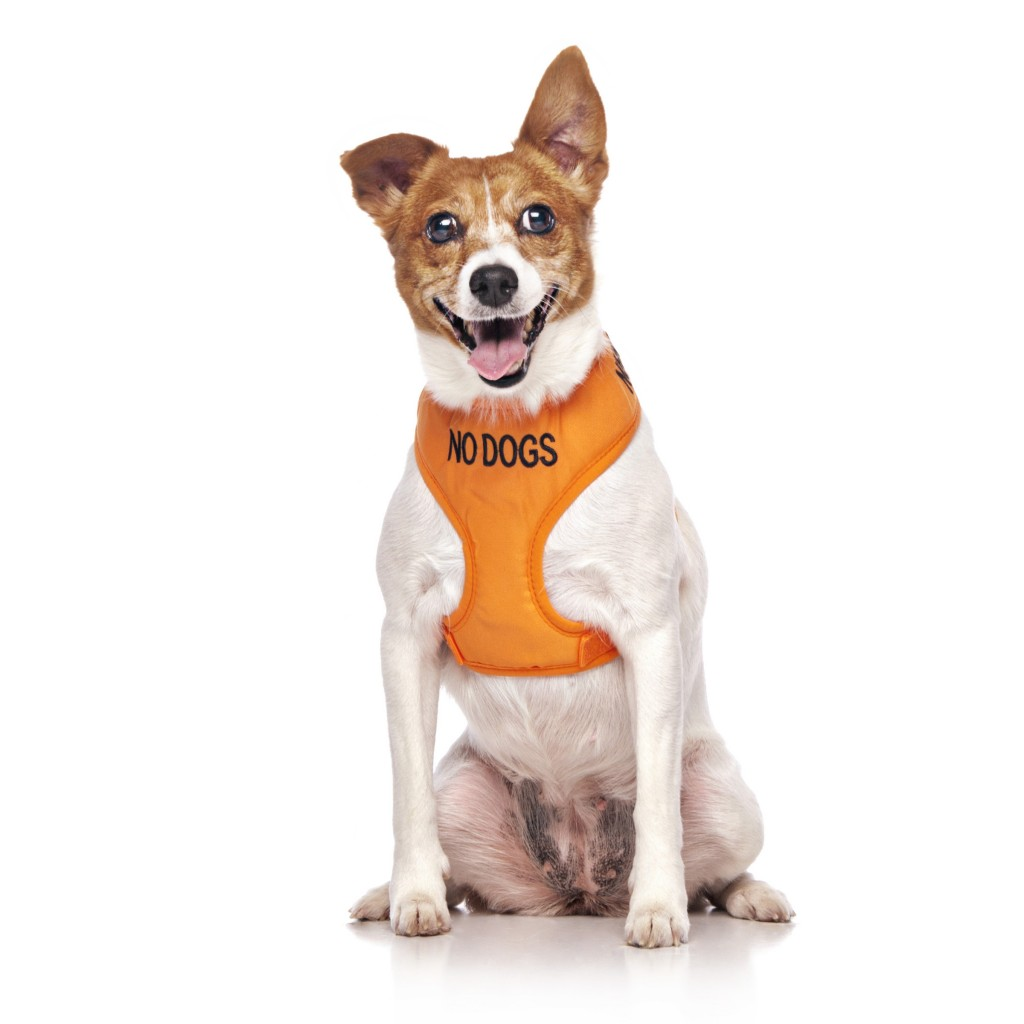 NO DOGS, Dog Vest Harness Orange Colour Code
