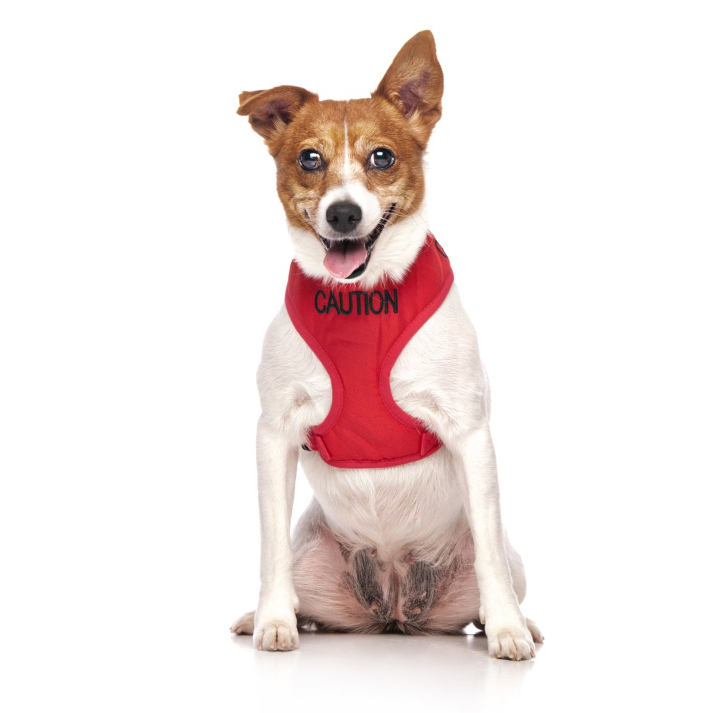 CAUTION  DOG, Dog Vest Harness Red Colour Code
