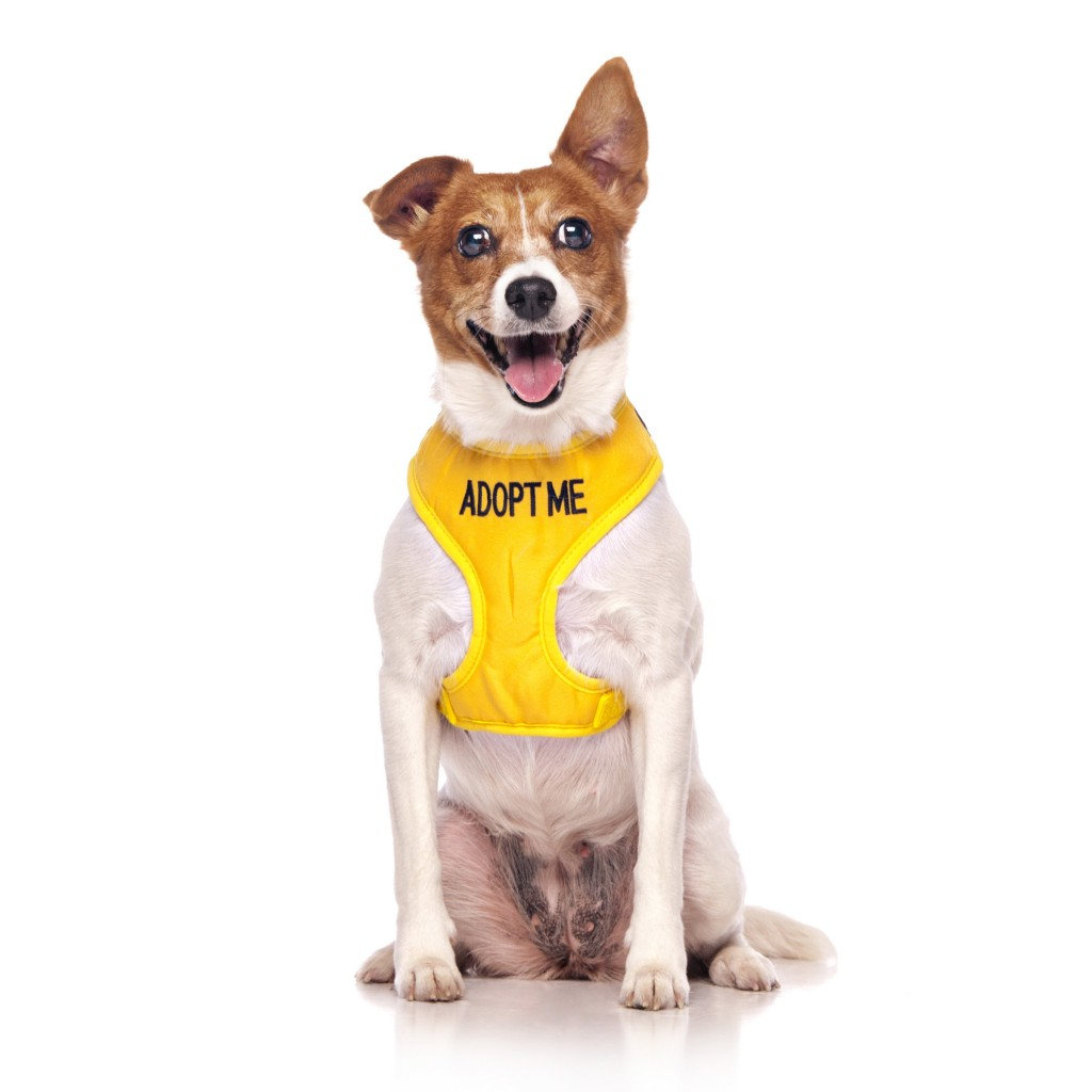 ADOPT ME DOG, Dog Vest Harness Yellow Colour Code